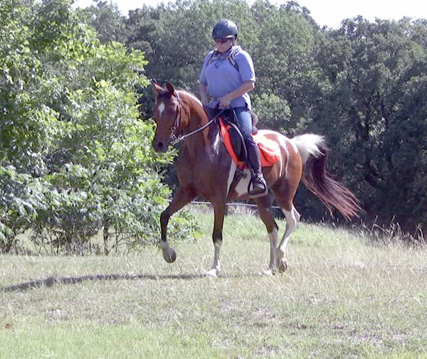 Western Pleasure, Hunter Pinto Arabian Mare