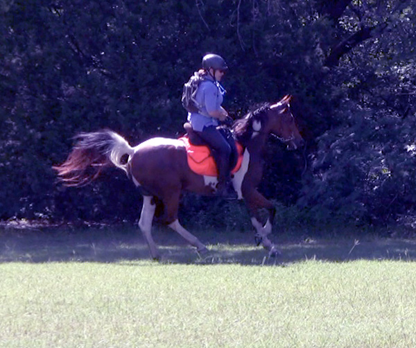endurance pinto paint arabian cross horse mare