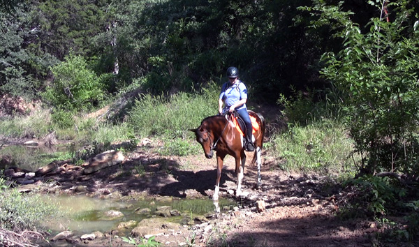 CTR Competitive Trail Horse